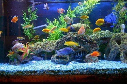 معافیت پرورش ماهی زینتی از مالیات